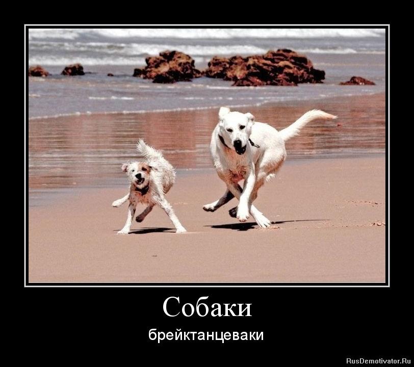 Собаки - брейктанцеваки