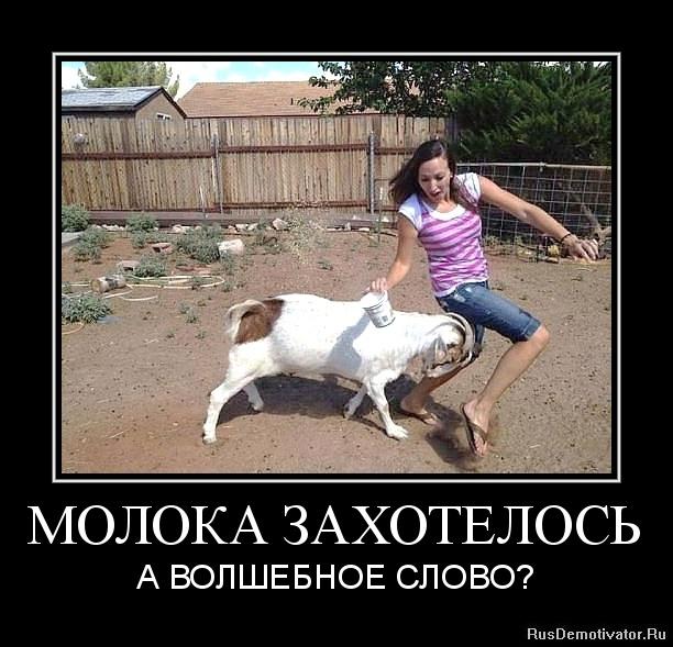 Теперь готов кошельки мано женские купить в москве юноша играет
