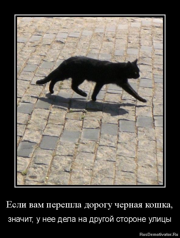 Если вам перешла дорогу черная кошка, - значит, у нее дела на другой стороне улицы