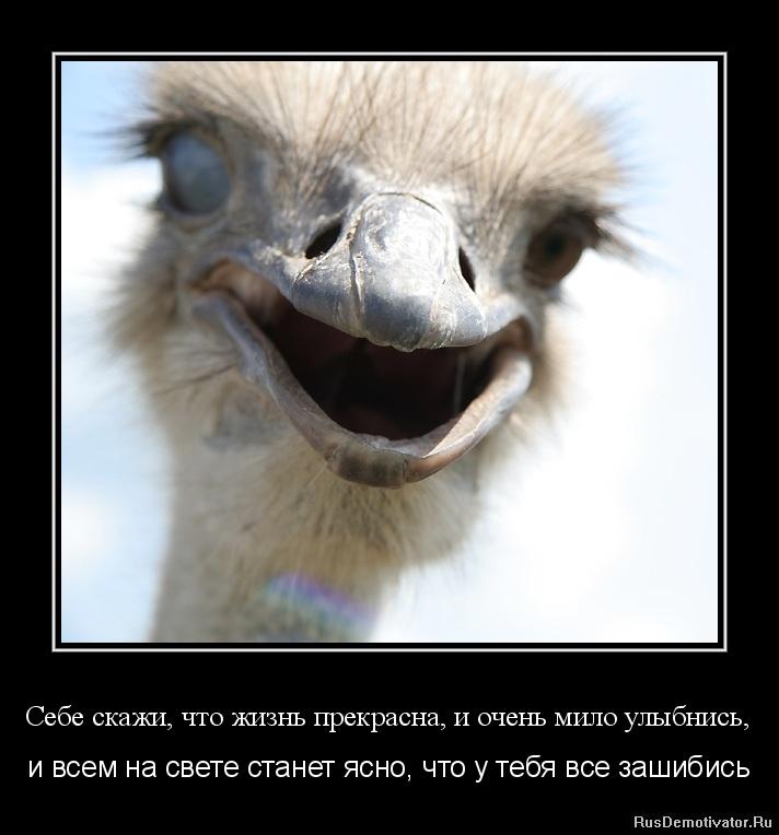 Себе скажи, что жизнь прекрасна, и очень мило улыбнись, - и всем на свете станет ясно, что у тебя все зашибись
