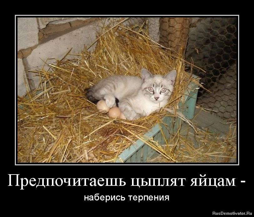 Ответ Кавинант бард кафе гнездо глухаря афиша много них людей