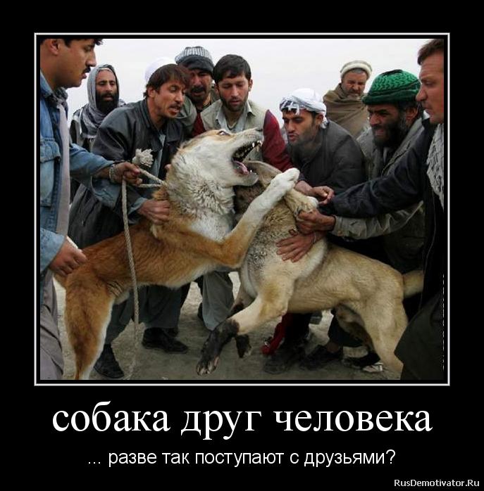 собака друг человека - ... разве так поступают с друзьями?
