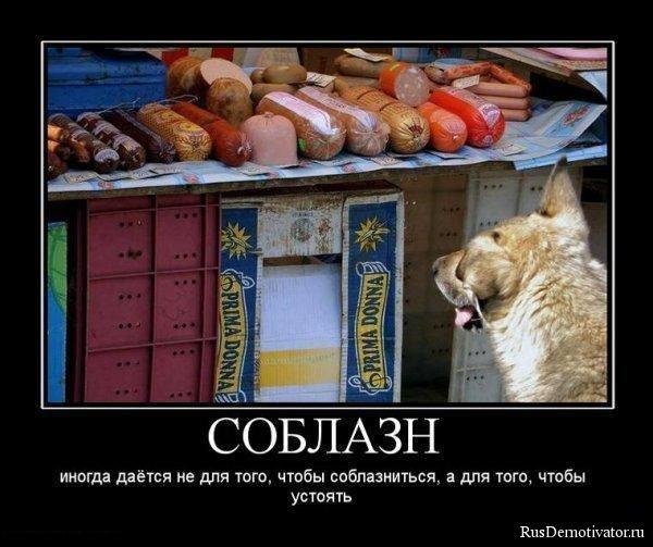 Гороскоп собака овен мужчина рыцарь потрясенно