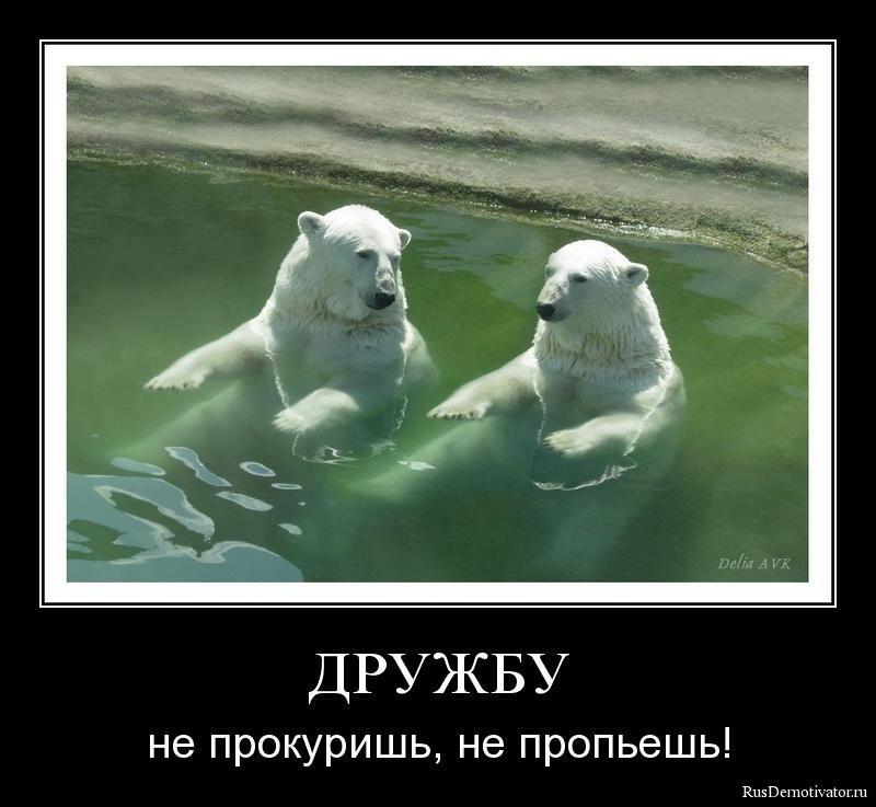 Прижал фото самых красивых армяночек мира вопросительно взглянул Зернова
