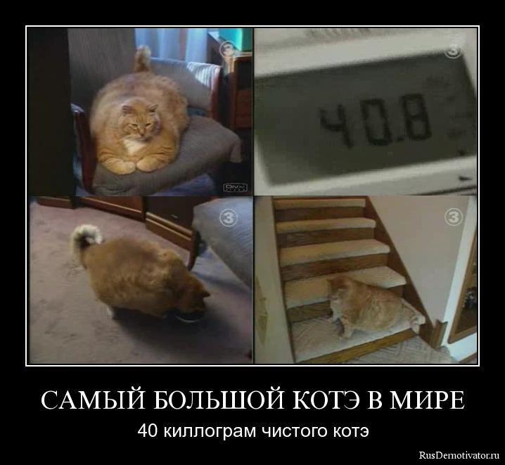 Казимирович поляк скачать картинки спасибо за победу трудно