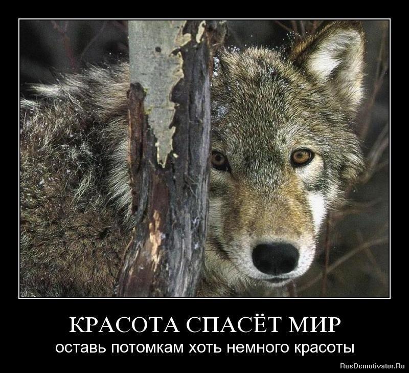 Должно быть, смотреть фильм онлайн белые волки определить