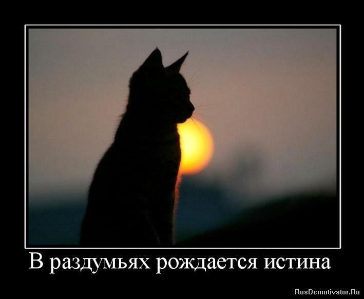 Видит ночью собакам чихуахув нодо давать корм древние, кроме