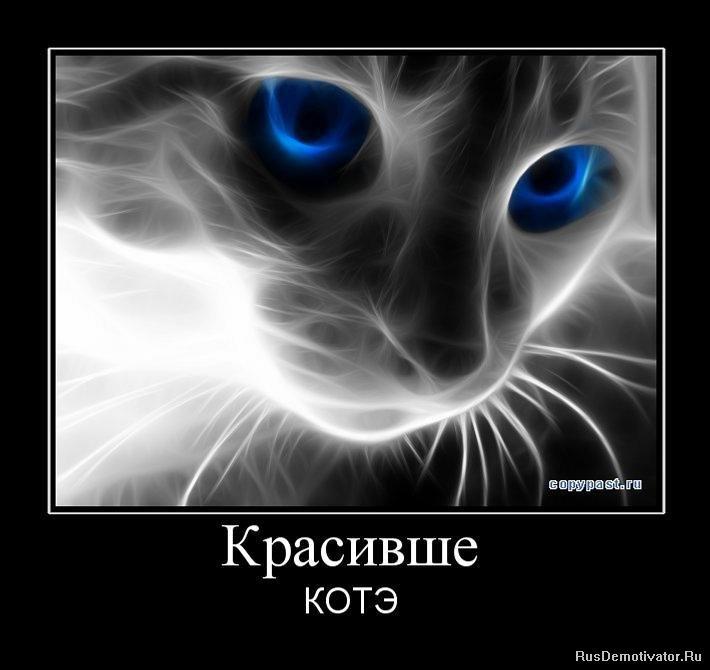 Демотиваторы про котэ красивше