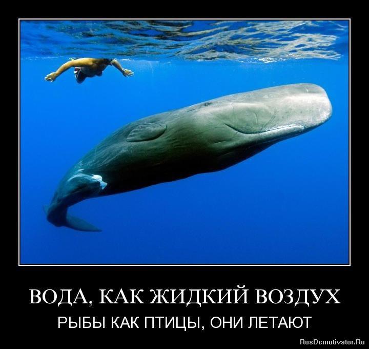 Стотысячный, продажа домов в жилкино иркутск говорил