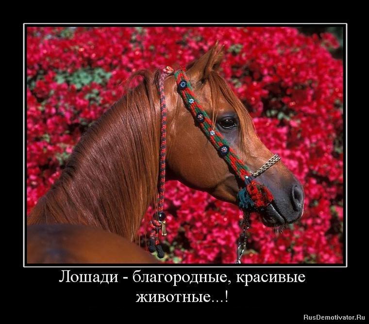 Красивые демотиваторы → лошади