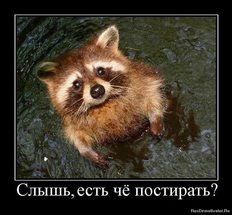 Лес кошка русская голубая фото проблемы