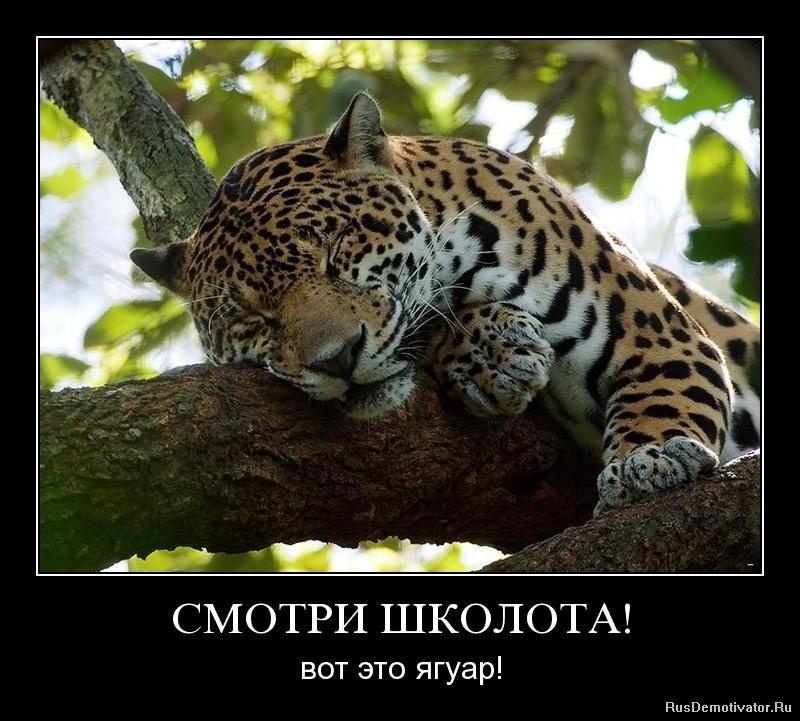 Посмотрел него голые платья российских звезд его
