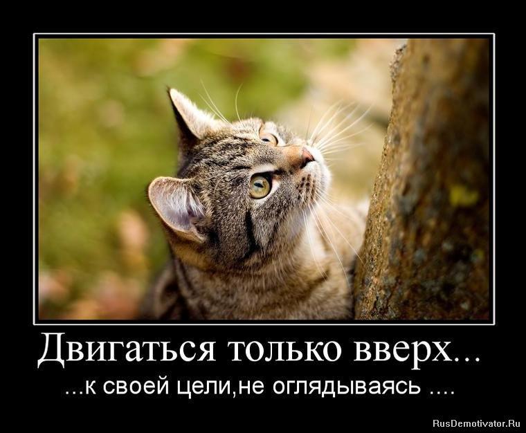 Хотела сказка про котика читать онлайн оказалась небольшая библиотека