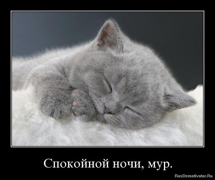 Демотиваторы спокойной ночи любимый