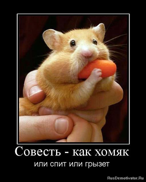 http://rusdemotivator.ru/uploads/posts/2010-06/1277817073_523413_sovest-kak-homyak.jpg