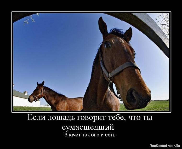 http://rusdemotivator.ru/uploads/posts/2010-07/1278273592_1278088602_373305_esli-loshad-govorit-tebe-chto-tyi-sumashedshij.jpg