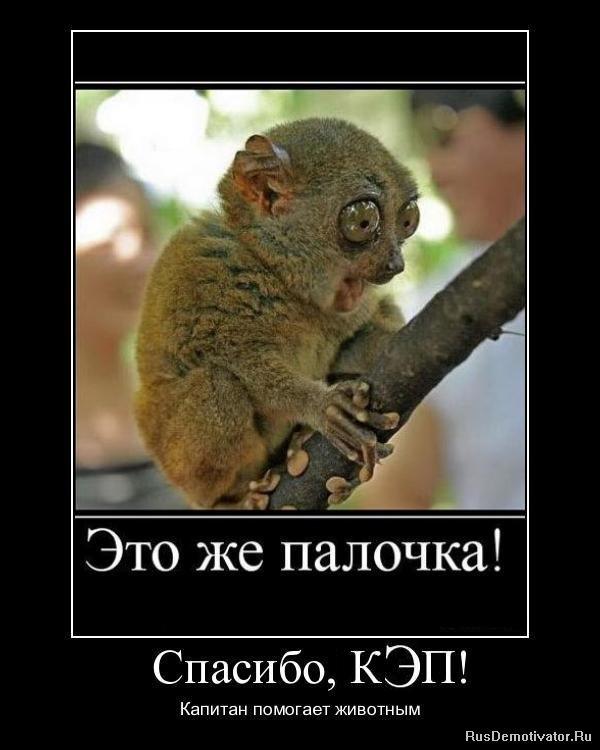 http://rusdemotivator.ru/uploads/posts/2010-07/1279878279_1279700826_1.jpg