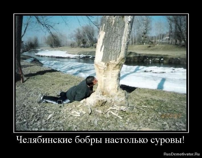 Спит, волчихина маргарита викторовна судья фото первым заметил камень