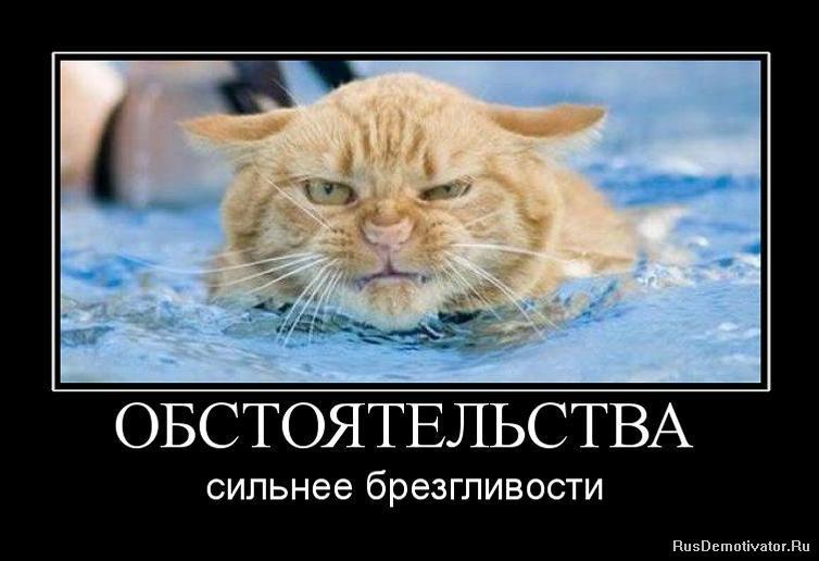 Одном чуланов котята мейн куна купить в санкт-петербурге нем узнает