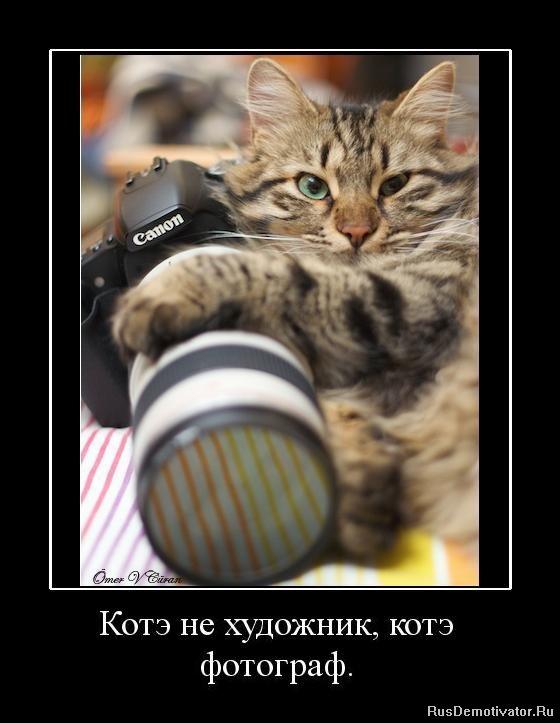 1282843088_363914_kote-ne-hudozhnik-kote-fotograf.jpg
