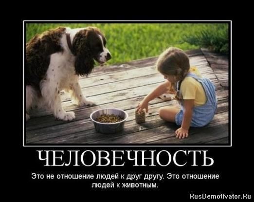 Картинки по запросу демотиваторы о любви людей к животным