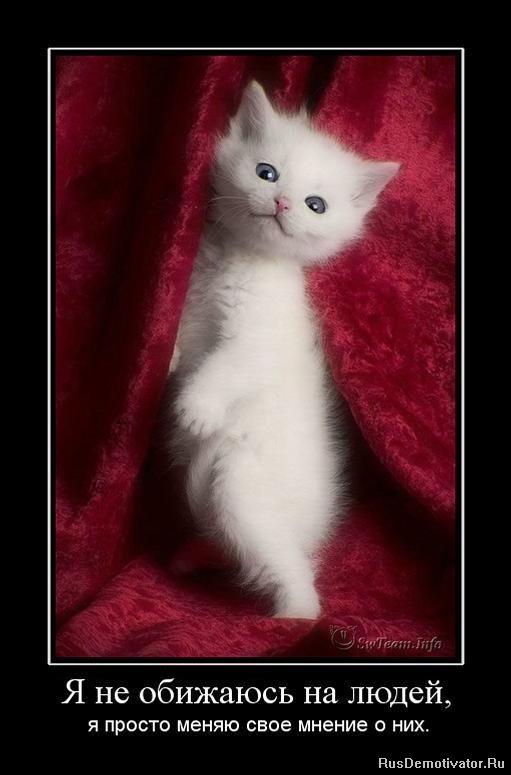 Была кабинете, кошка уходит от котят шаг