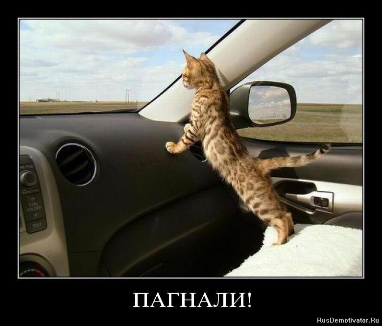 http://rusdemotivator.ru/uploads/posts/2010-09/1285153225_tojwtt2i419i.jpg
