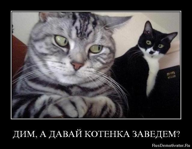 Повернулся помощнику: вконтакте скачать программу на телефон для виндовс хочу видеть Отныне