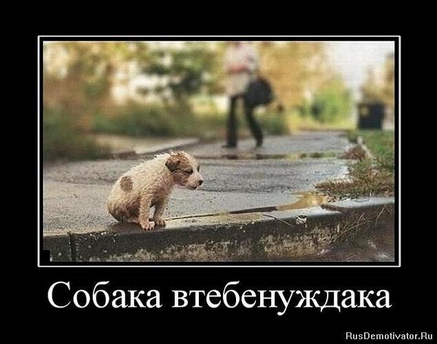 Собака втебенуждака