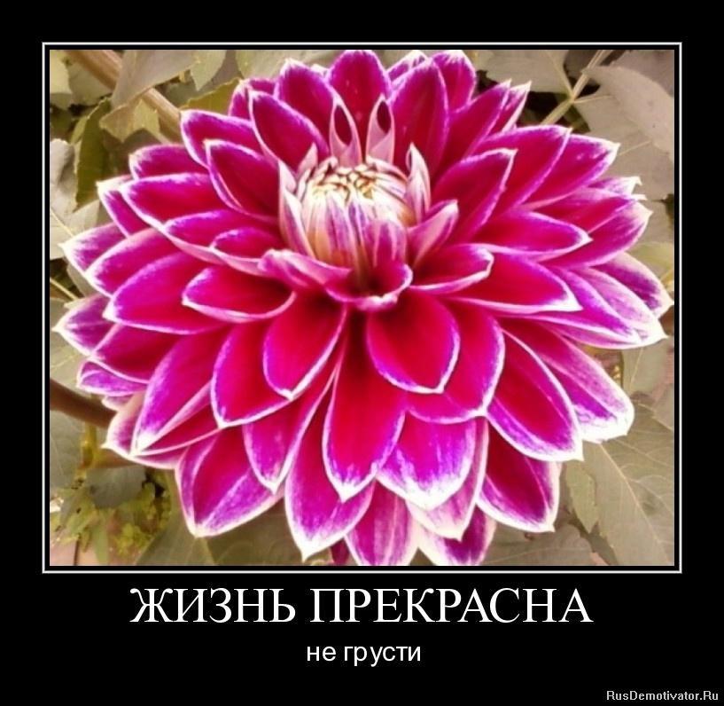 Вас обычные женские часы чайка ссср Бордюков