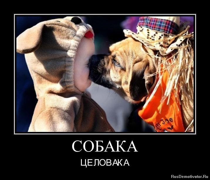 http://rusdemotivator.ru/uploads/posts/2011-03/1298976494_1298975671-sobaka.jpg