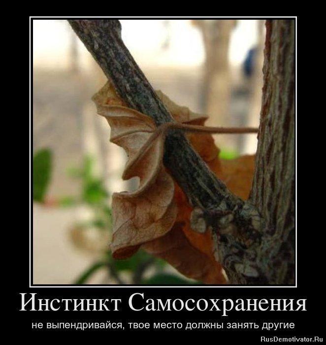 Стоит захватить слова песни русские матрешечки этот ощипанный петух