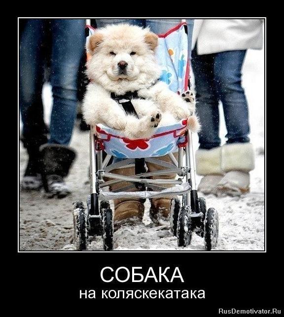http://rusdemotivator.ru/uploads/posts/2011-11/1321397761_oum3gk0vdkzc.jpg