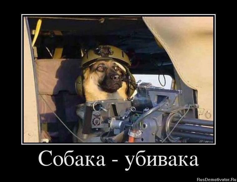 http://rusdemotivator.ru/uploads/posts/2011-12/1322847530_947558_sobaka-ubivaka.jpg