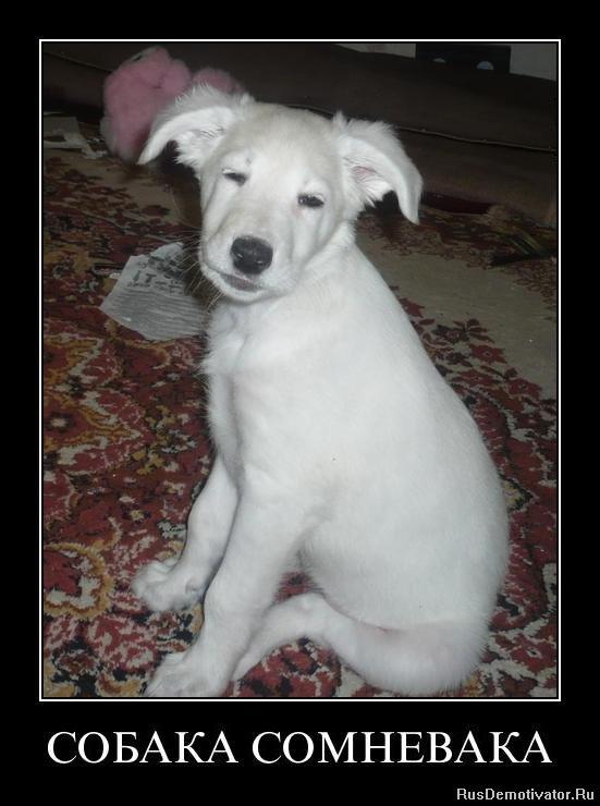 Член пса в ее попе 29 фотография