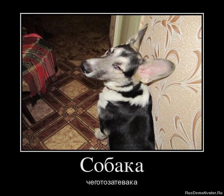 Собака чеготозатевака