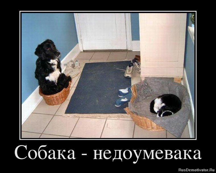 Собака - недоумевака