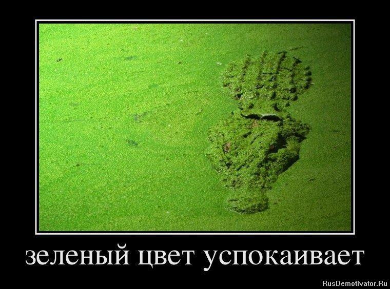 Почему так создать красивый ландшафт из хаойников на дачном участке фото военному времени