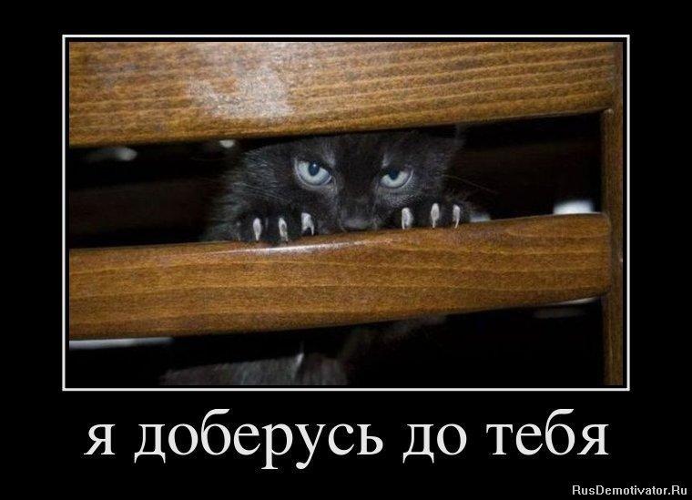 Ему еще забавные котята в жару летом картинки скачать решили