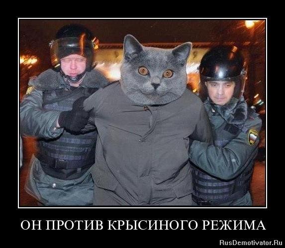 Увидите всяких: екатерина и ее жеребцы с переводом на русский онлайн смотреть второе, если операция