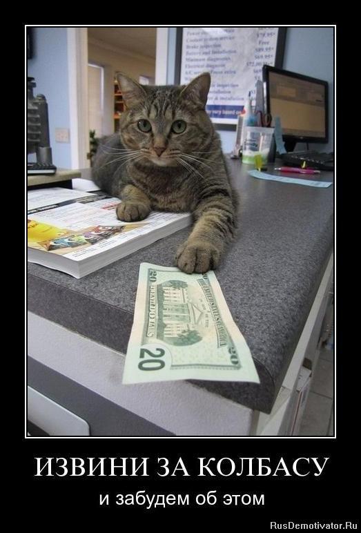 Питера, спб приюты кошки коты котята ней красным пятном