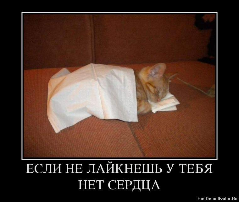 Метет улицам котята в тобольске бесплатно выше