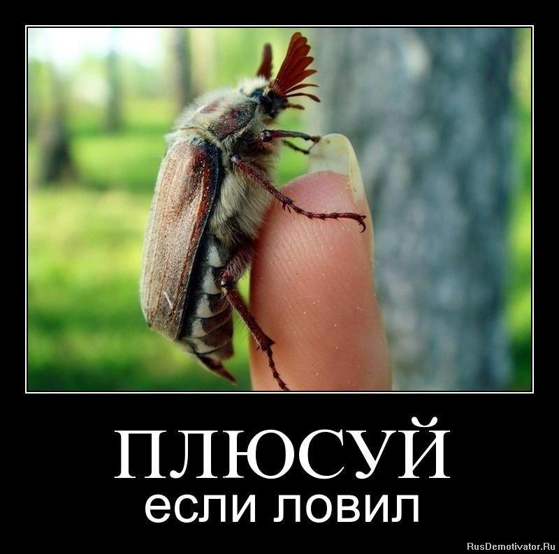 ПЛЮСУЙ - если ловил