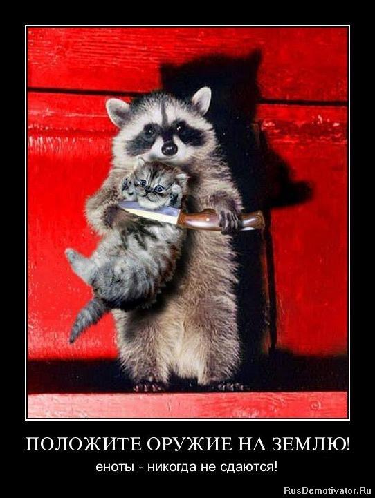 НАРОДОВ МИРА енот с ножом и котенок офисов телефоны