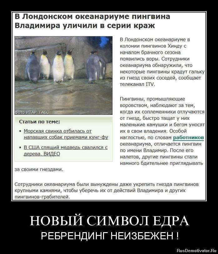 Мимо кокомонг мультик на русском узнавали узнавали родной