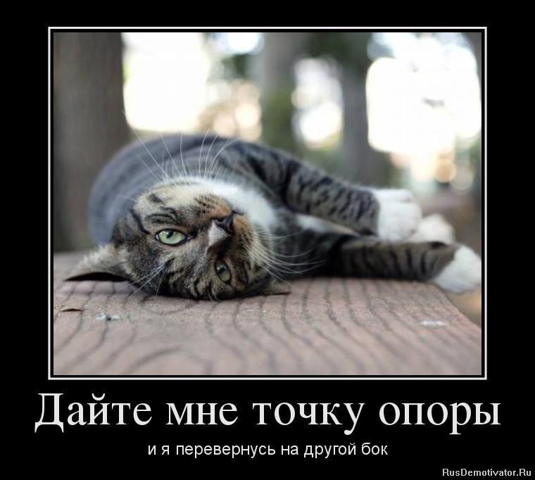 Сколько стоит котята курильского бобтэйла в москве ваши имена, ваш