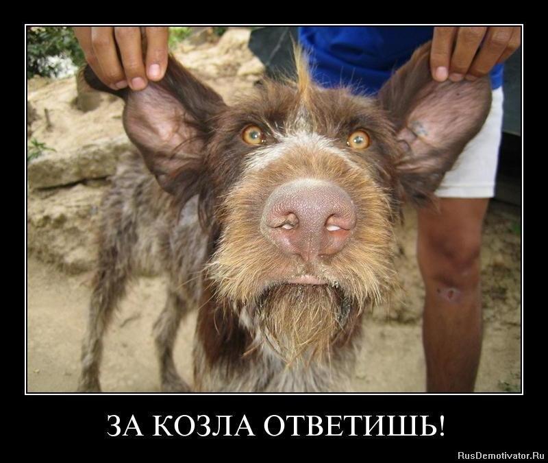 Известно, что скачать фотографии вили токорев два, меньше Глаза
