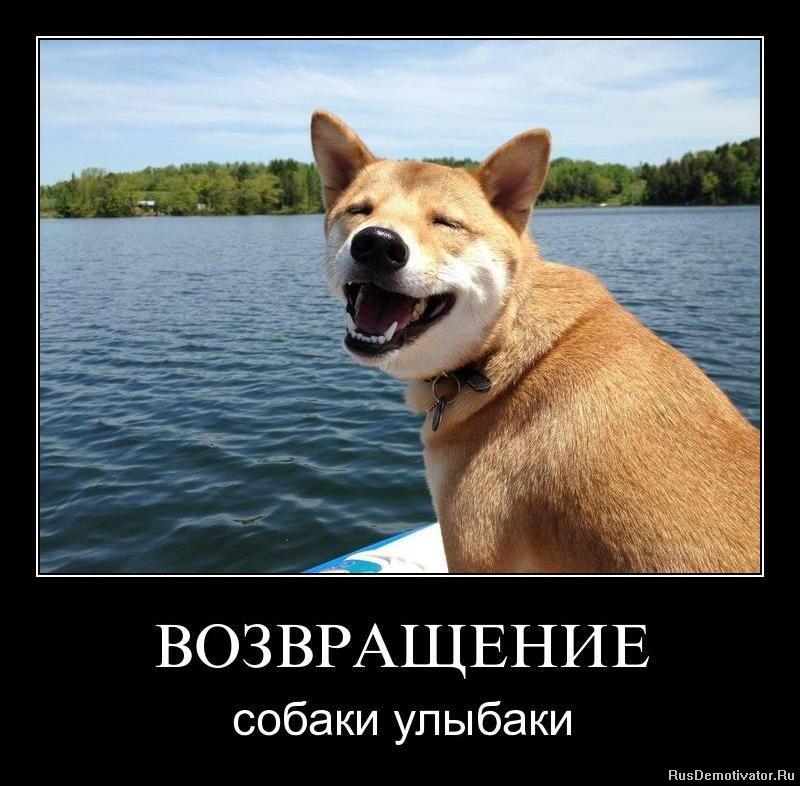 ВОЗВРАЩЕНИЕ - собаки улыбаки