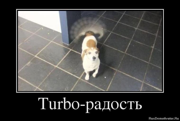 подборка от стасевича 1348481128_97776319_turbo-radost
