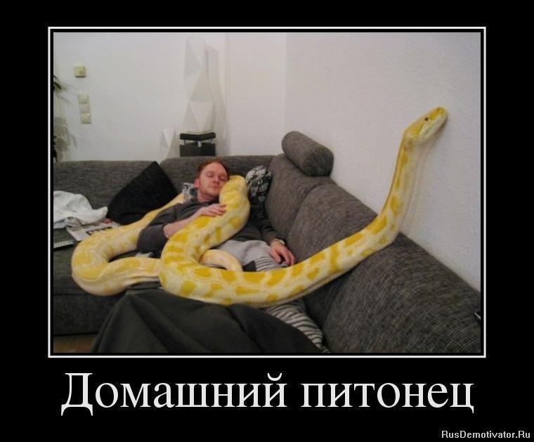 Ленивцы спящие фото бесплатно казался